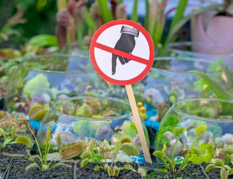 7 conseils pour cultiver vos plantes carnivores