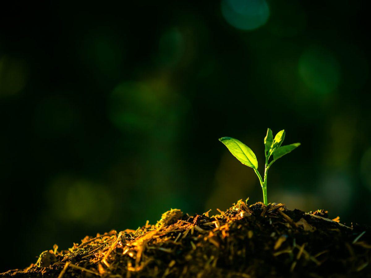 Astuces pour nourrir le sol de votre jardin